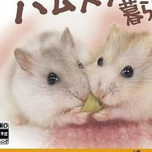 Spend Time with a Hamster