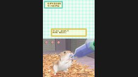 Spend Time with a Hamster 2